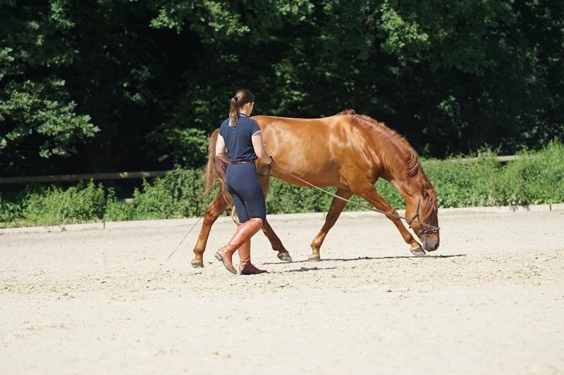 Das Pferd soll sinnvoll longiert, nicht geschleudert werden