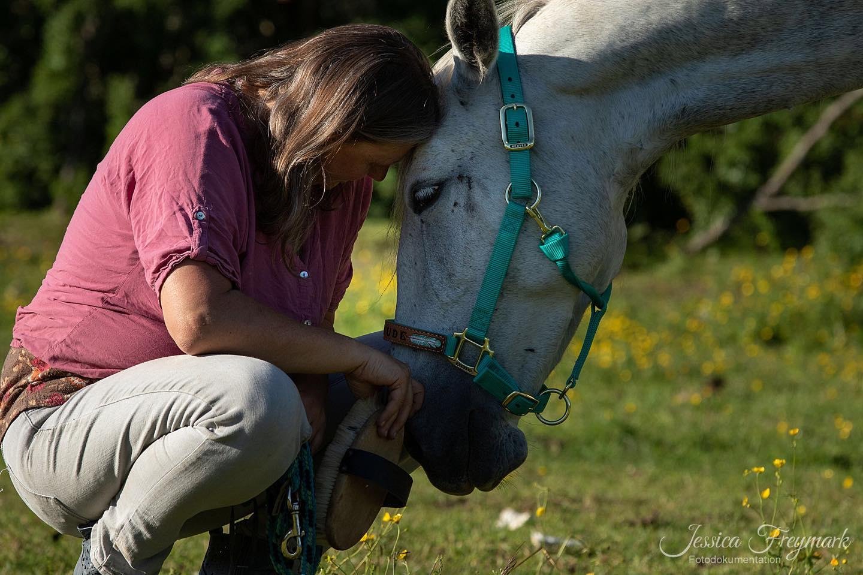 Wieviel Ps Hat Ein Pferd