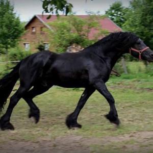Von Pferderettern und anderen Pferdeliebhabern