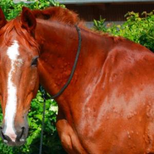 Mein Pferd hat Quaddeln