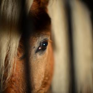 Die Haltung der Pferde hat sich in all den Jahren stark gewandelt