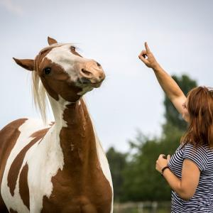 Pferd Jack kommuniziert mit seinem Menschen