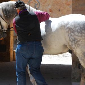 Dem Pferd auch in der Ausbildung die Würde lassen