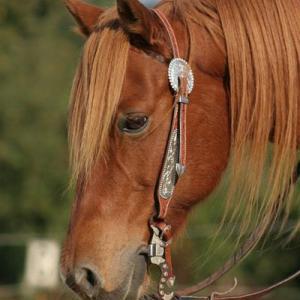 Gute Ausrüstung im Horsemanship