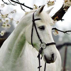 Ein Pferd mit einem gebisslosen Zaum