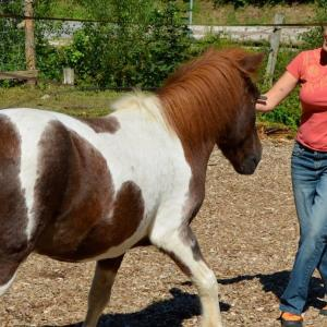 Nähe und Distanz in der Pferdesprache