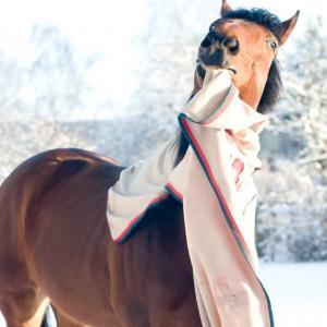 Über den Sinn oder Unsinn von Pferdedecken