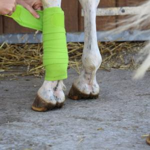 Bandagen am Pferdebein