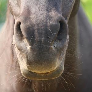 Das empfindliche Pferdemaul