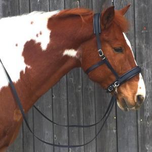 Der Equizaum am Pferdekopf