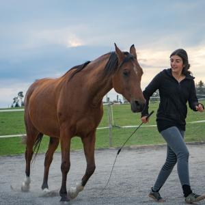 Selen Graf mit ihrem Pferd Bangelis