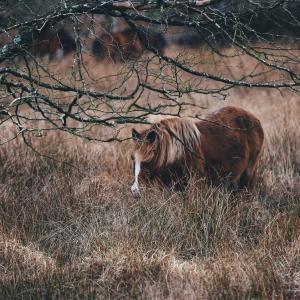 Pferde sind Steppentiere