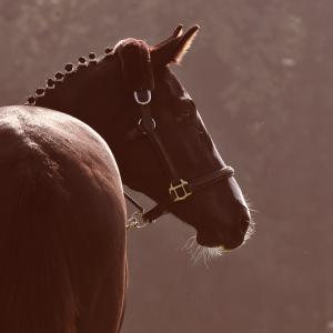 Tierschutzvorschriften in der Pferdehaltung