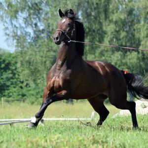 Pferde können Schäden verursachen