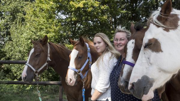 Insa und ihre Pferde