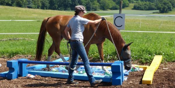 Claudia F. Meier bei der Bodenarbeit mit Pferd