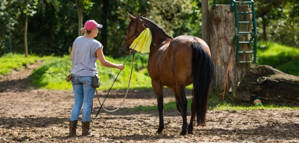Pferde lernen immer