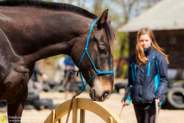 Wie gut ist mein Pferd erzogen?