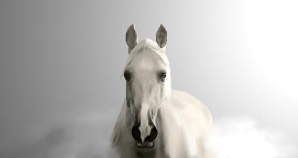 Der letzte Gang mit dem Pferd