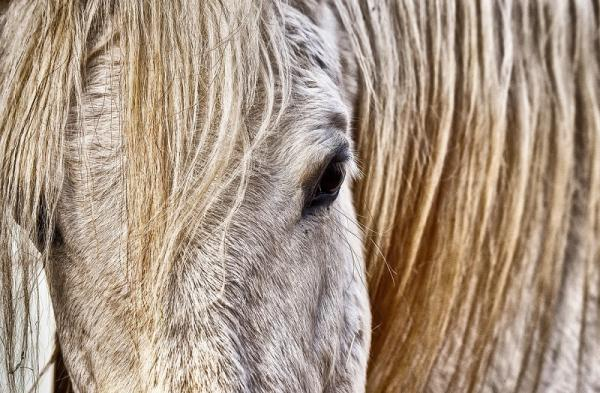 Pferdeaugen