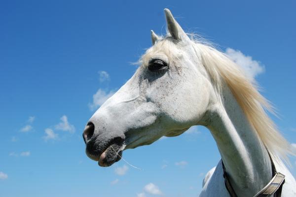 Dein Pferd - ein Ignorant?