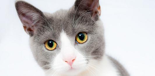 Katzen energetisch behandeln