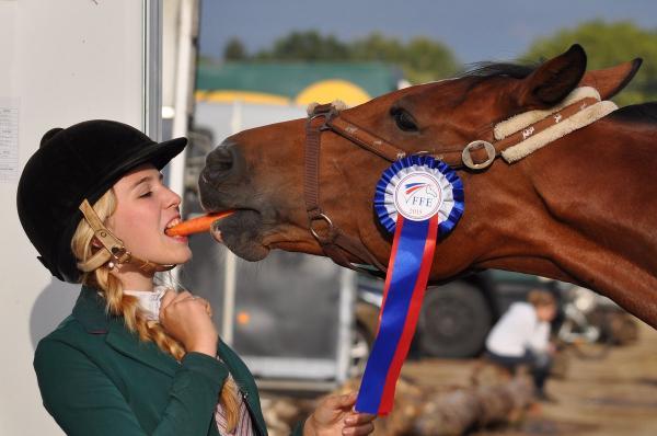 Nasenriemen pferdegerecht verschnallen