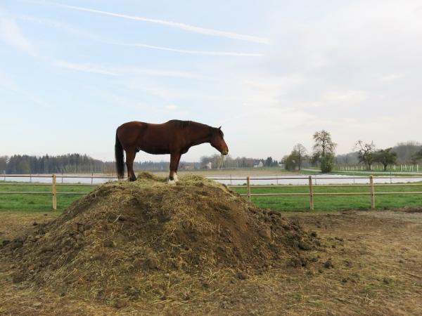 Pferd geniesst den Ausblick im Paddock Paradise