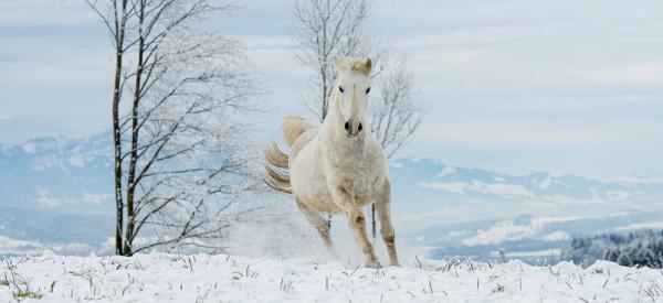 Pferde im Winter fit halten