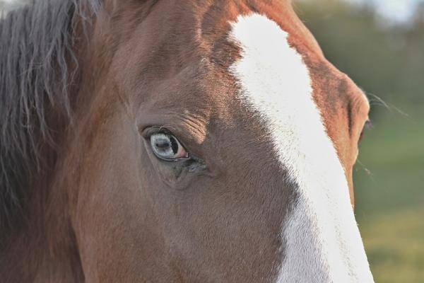 Dein Pferd spiegelt Dich