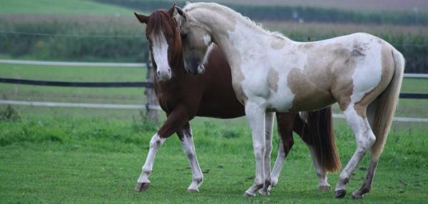 Wenn Pferde sich lieben