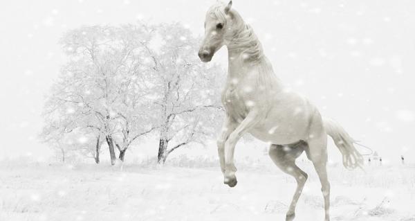 Unternehmungslustige Pferde im Winter