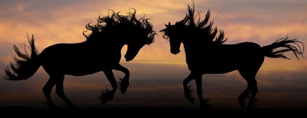Das Pferd als Dein Spiegel