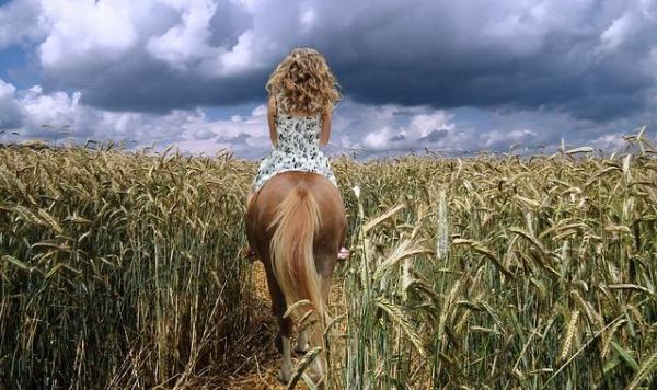 Pferde fühlen, um sie zu führen