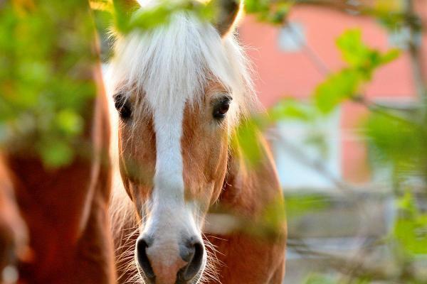 Ein Pferdekauf muss wohlüberlegt sein