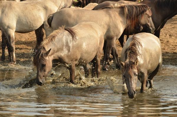Pferde bei Hitze