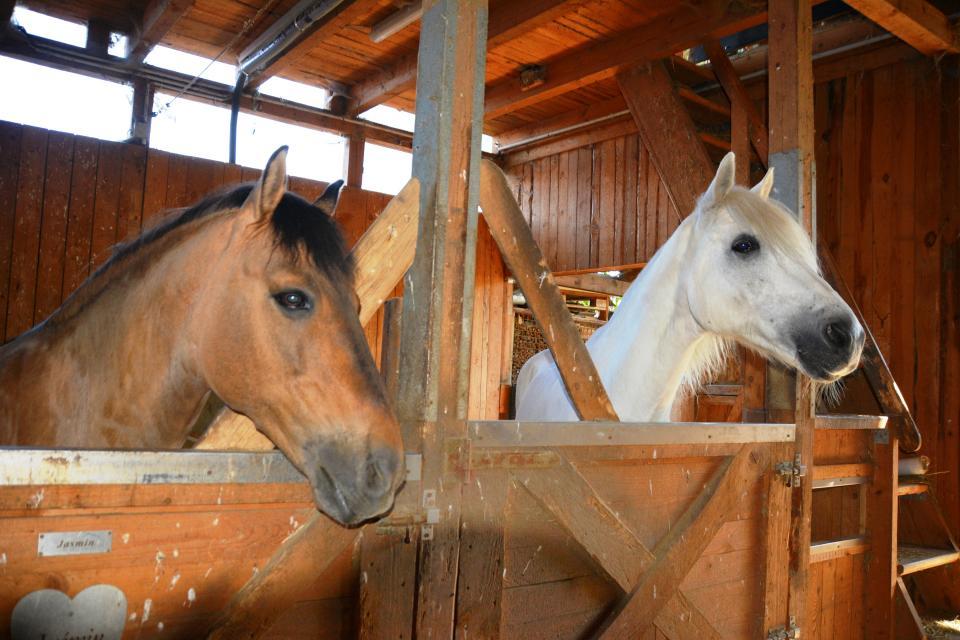 Umfrage zur Pferdehaltung