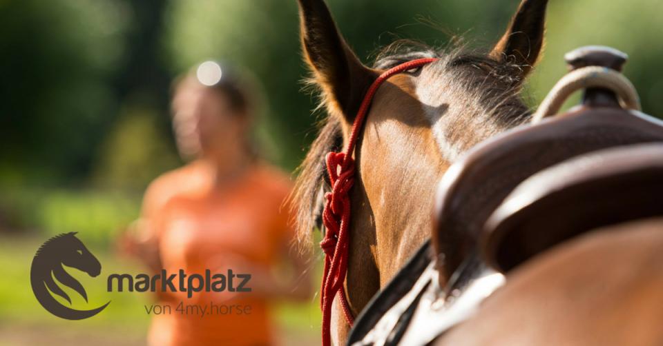 Ein Marktplatz für Pferdefreunde