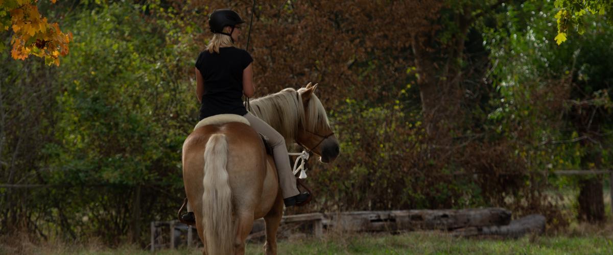 Energetisch kommunizieren mit Pferden