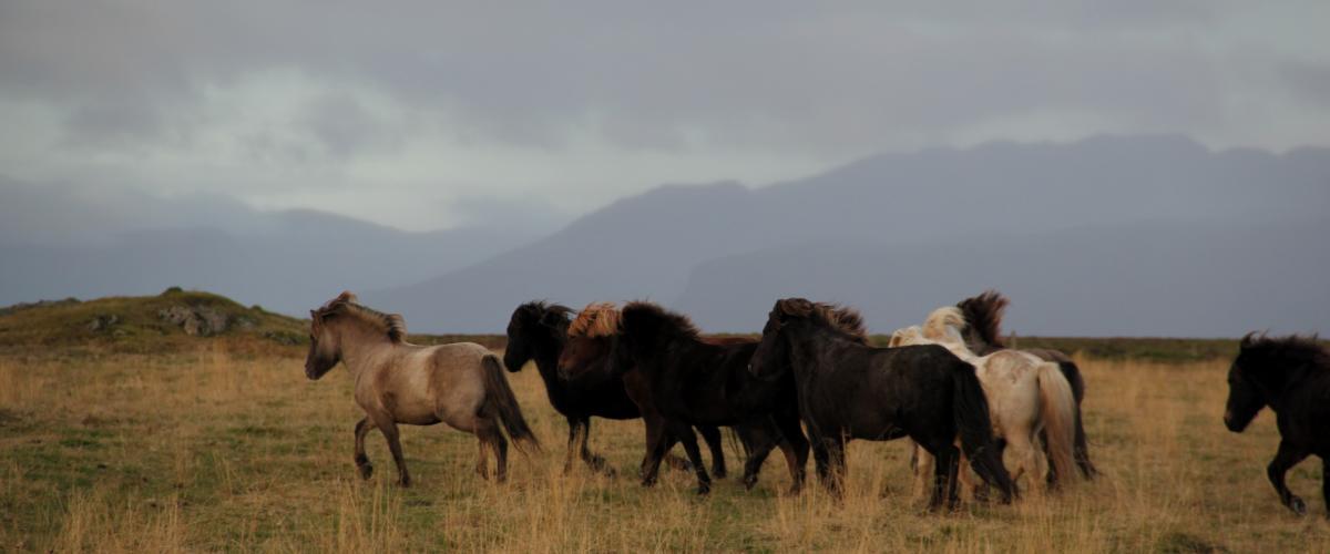 Der Verbund der Pferde