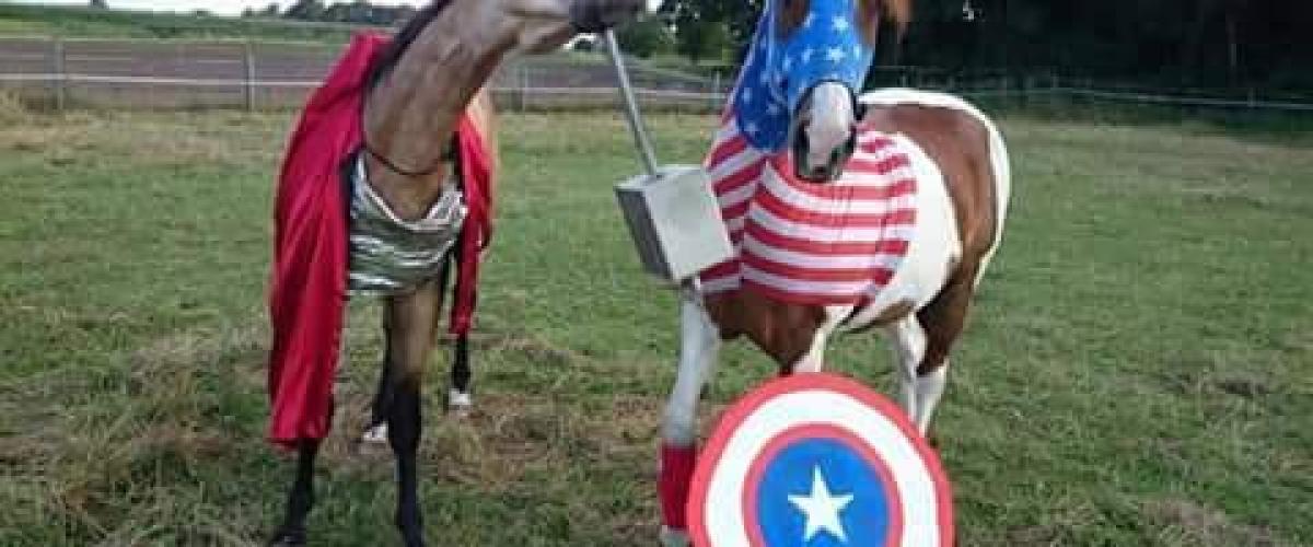 Wenn sich Pferde prügeln
