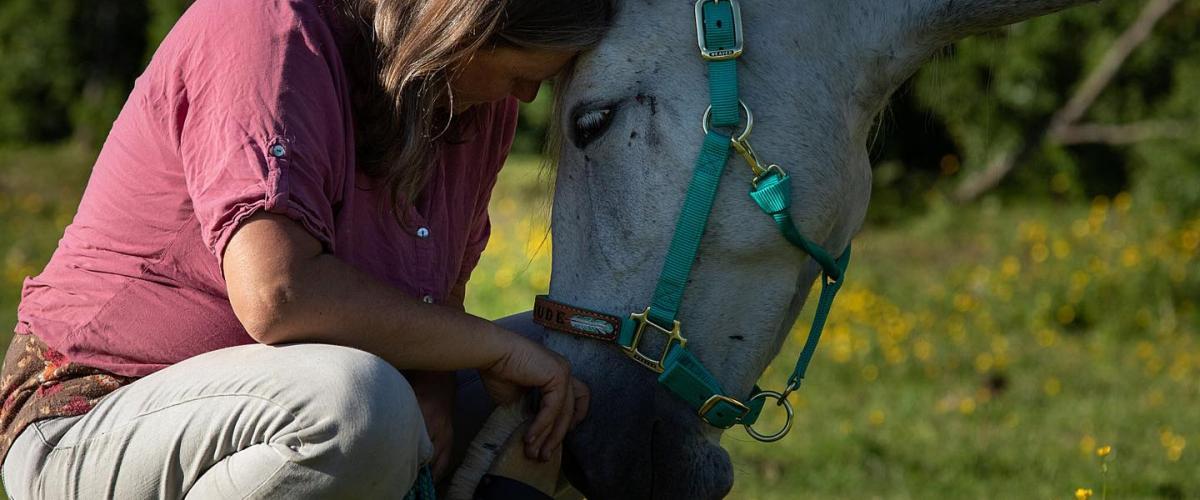Wieviel Mensch braucht ein Pferd? Titel