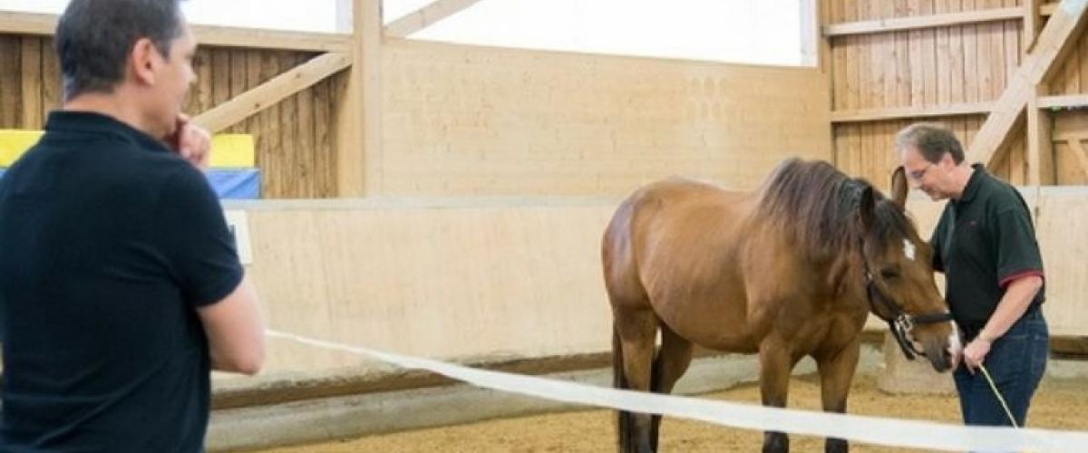 Pferde Coaching Ausbildung