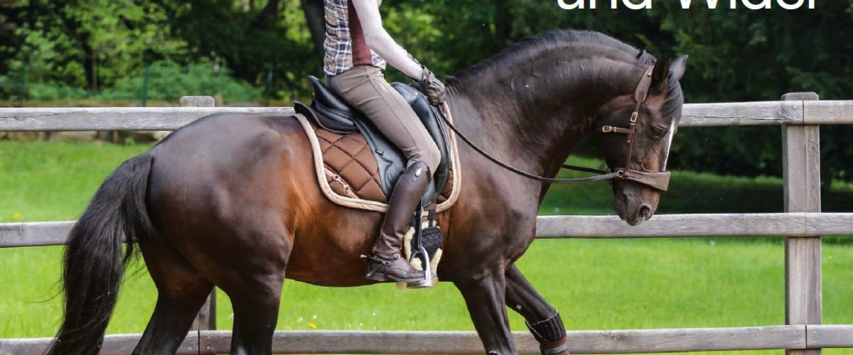 Alizée Froment reitet mit Sidepull