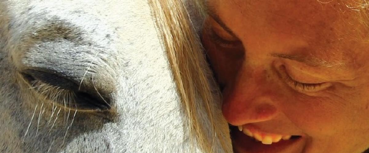 gewaltfreier Umgang mit Pferden