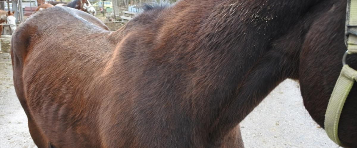 mein Pferd ist zu dünn