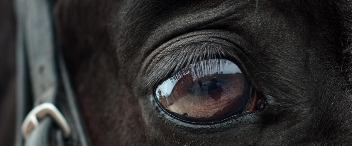 Das Pferd spiegelt Dich