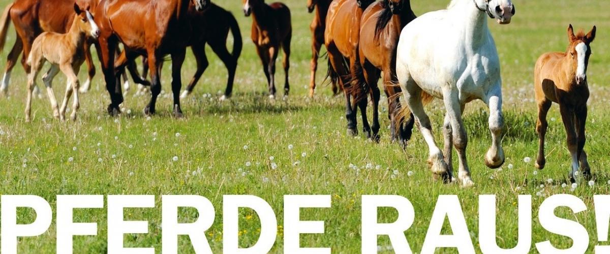 Pferde raus - eine Kampagne des Schweizerischen Tierschutzes STS