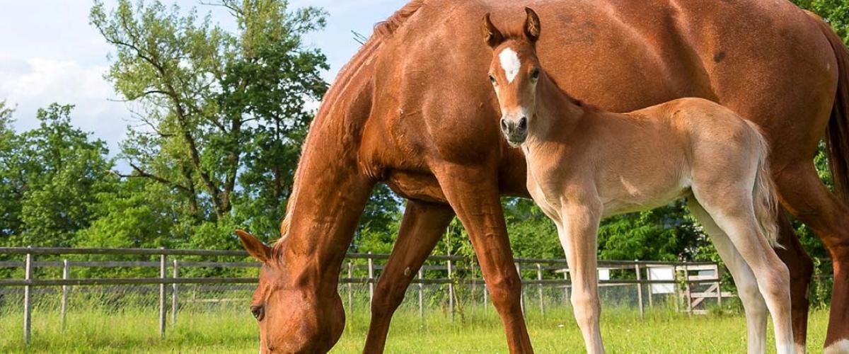 Umfassendes Pferdewissen