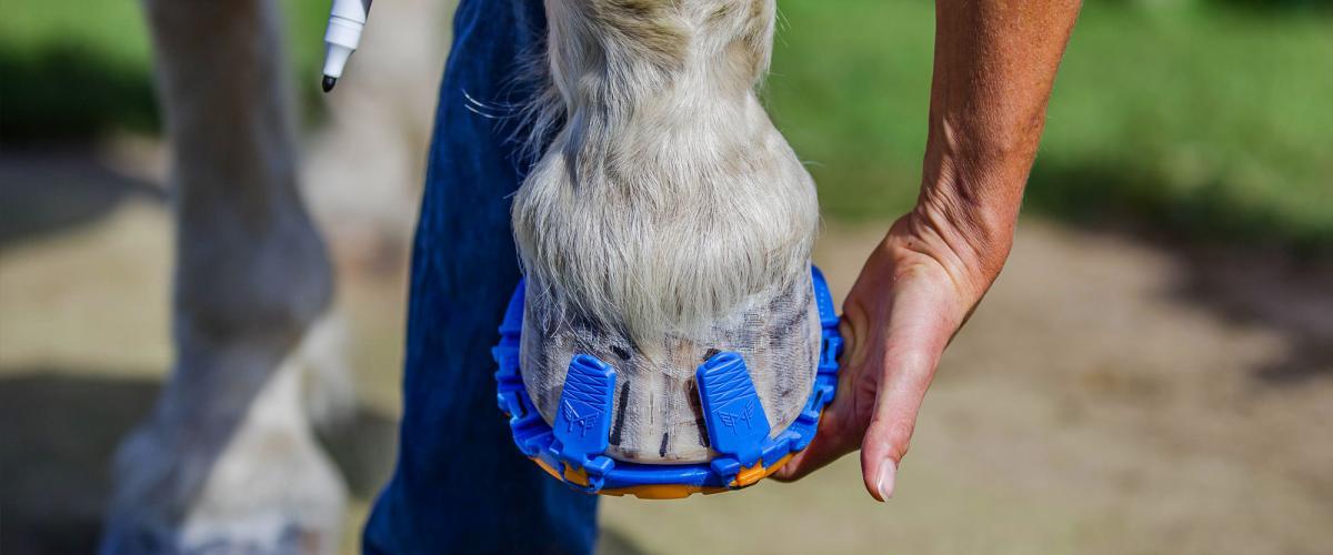 Montage der Horserunners
